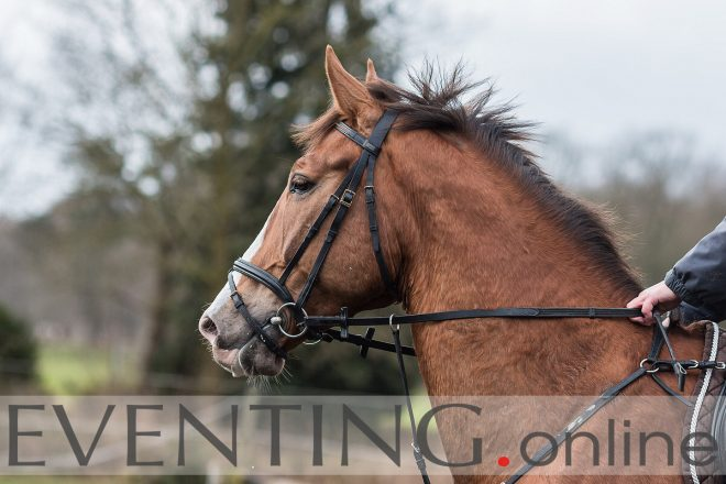 horses head photo by eventing photo