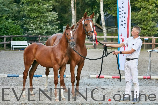 Winning foal dutch eventing selection photo by Eventing Photo
