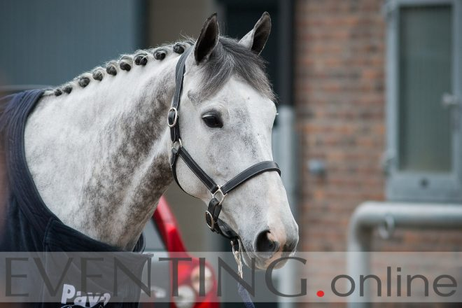 horses walking at Ermelo photo by Eventing photo