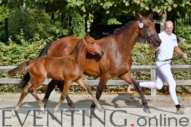 U-nity (Contendro x Filmstar) veulenkeuring Stal QC 2020 foto © Eventing photo